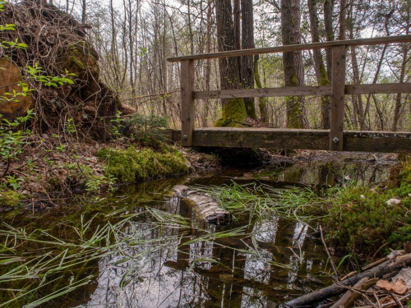 Attemsmoor Steg mit Sumpfloch