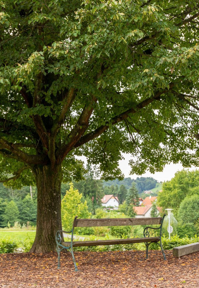 Rastplatz unter einem großen Baum