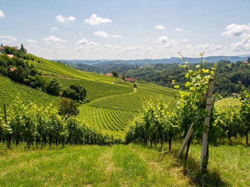 Weinbaugebiet Gamlitz - Südsteirische Weinstraße mit Blick auf die Südsteiermark