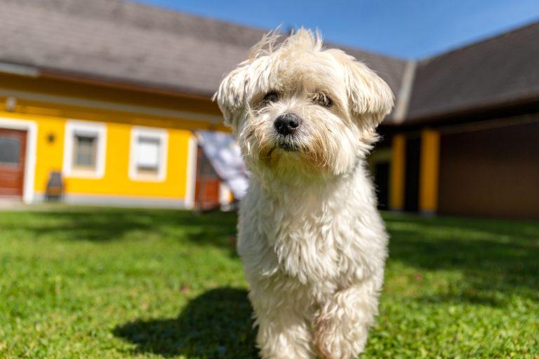 Hund vor Ferienwohungen Moitz auf der Wiese